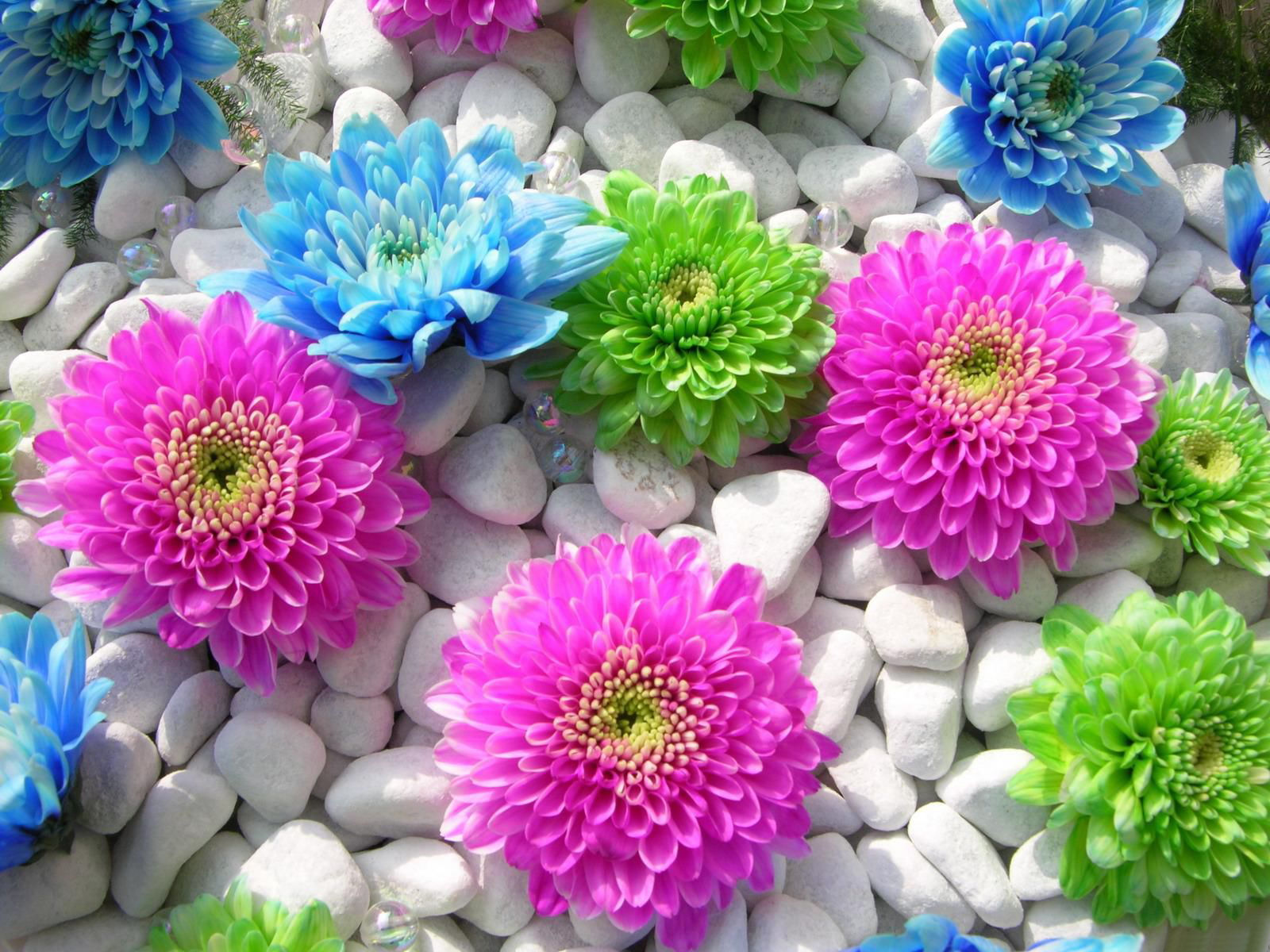 beautiful-flowers-wallpapers- (10)