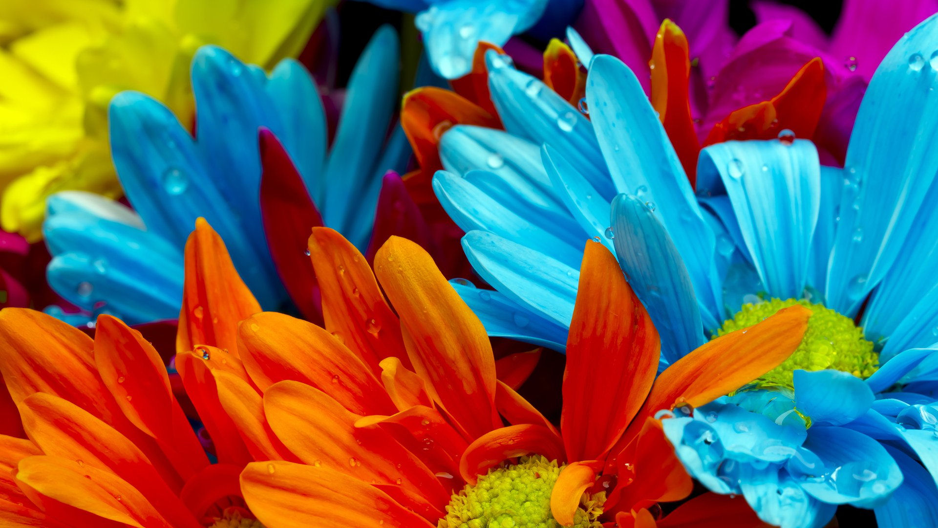 beautiful-flowers-wallpapers- (6)