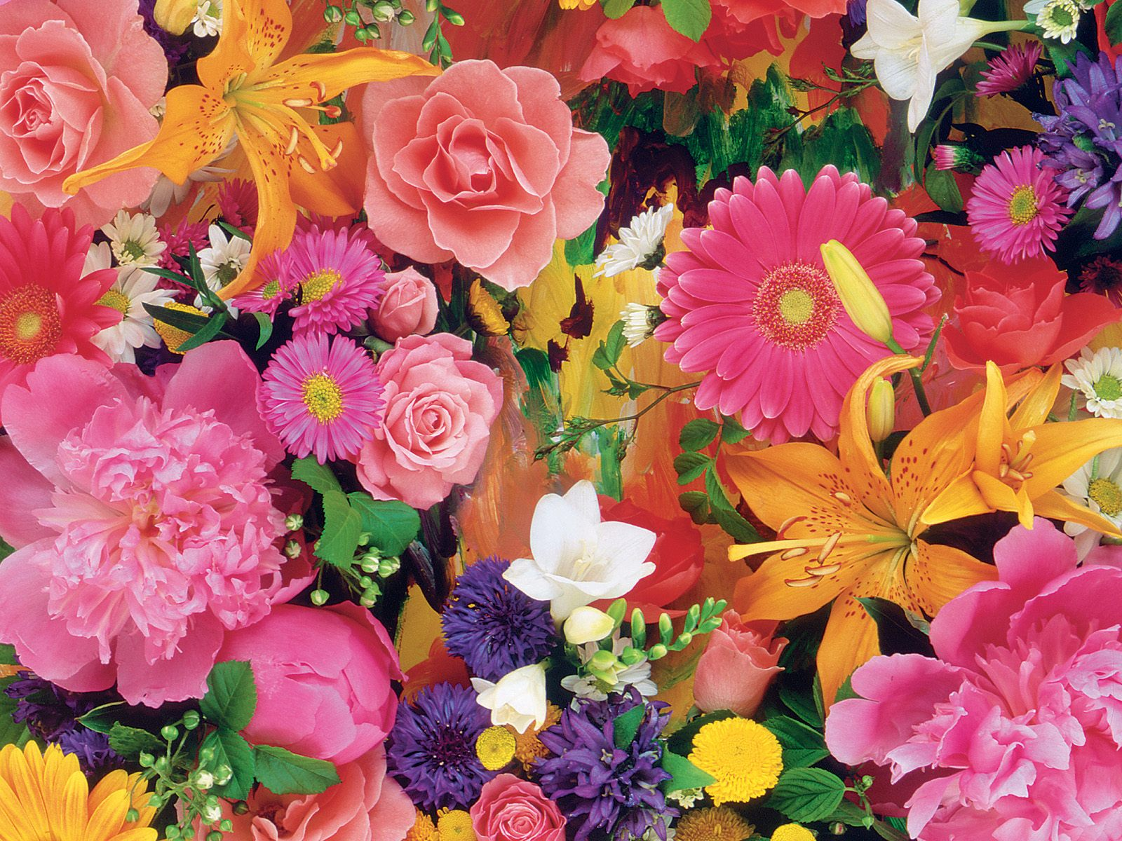 beautiful-flowers-wallpapers- (9)