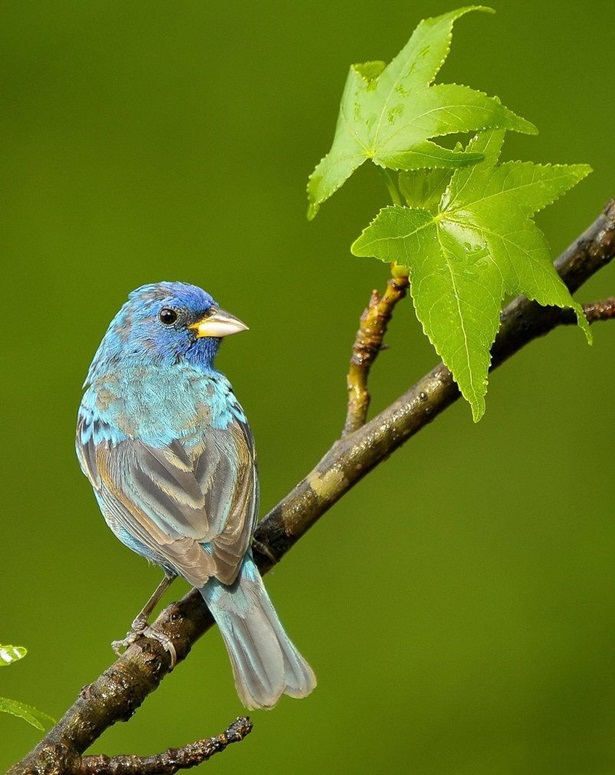 colorful-birds-pictures- (4)