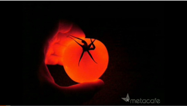 glowing-tomato-video