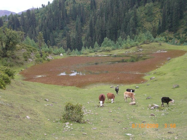 siri-paye-and-shogran-valley-pakistan- (8)