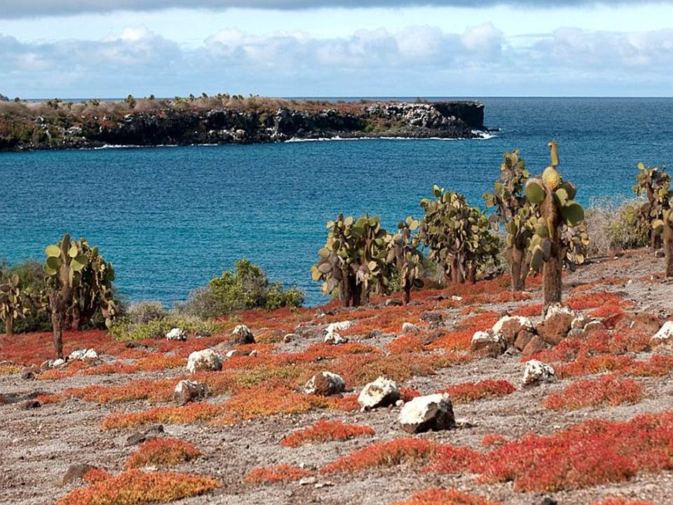 galapagos-island-45-photos- (10)