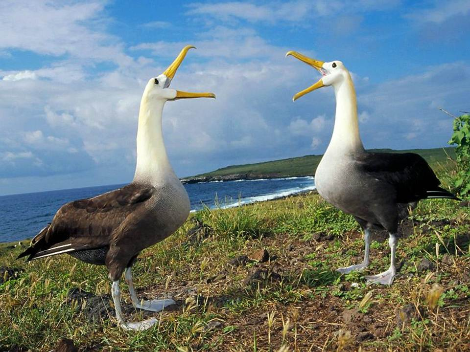 galapagos-island-45-photos- (43)