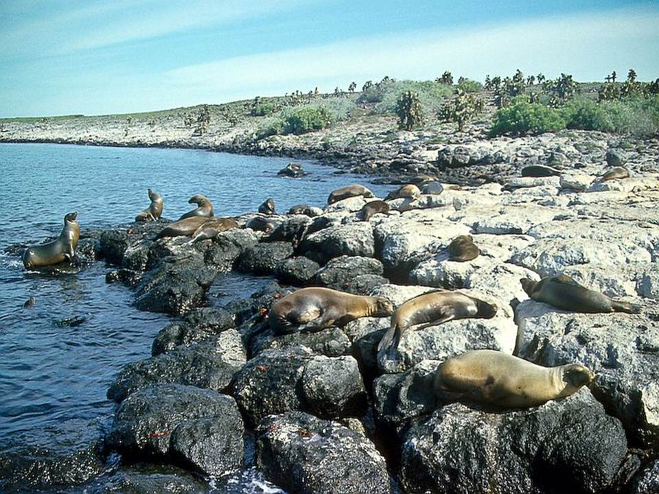 galapagos-island-45-photos- (8)