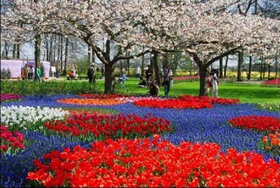 netherlands-tulips- (11)