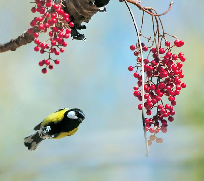 beautiful-birds-photos-by-john-soong- (10)