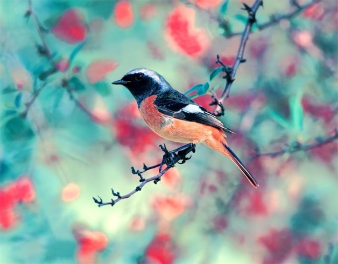 beautiful-birds-photos-by-john-soong- (17)