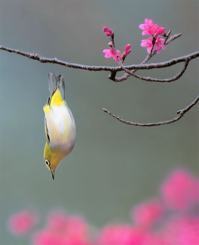 beautiful-birds-photos-by-john-soong- (18)