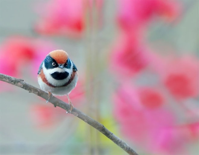 beautiful-birds-photos-by-john-soong- (2)