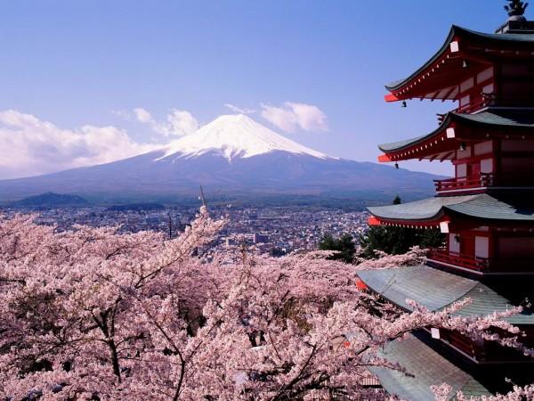 cherry-blossom-wallpaper-16-photos- (10)
