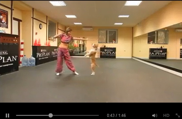 doggie-dance-video-