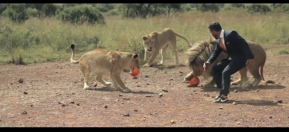 football-with-wild-lions-video-