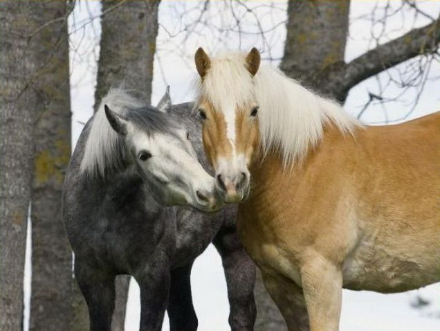 wild-horse-pictures- (14)