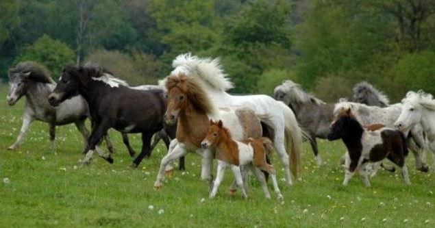 wild-horse-pictures- (2)