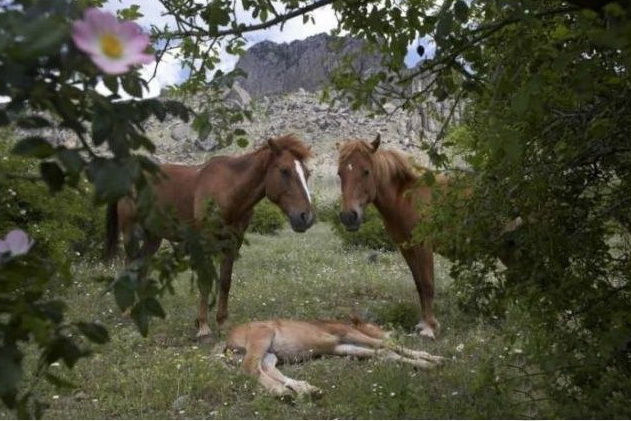 wild-horse-pictures- (6)