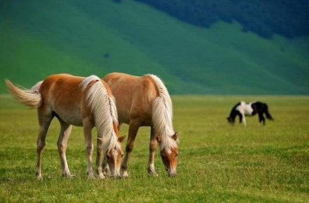 wild-horse-pictures- (7)