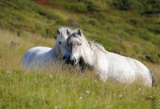 wild-horse-pictures- (9)