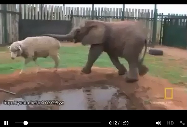 adorable-friendship-video