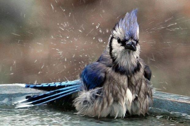 birds-in-rain- (12)