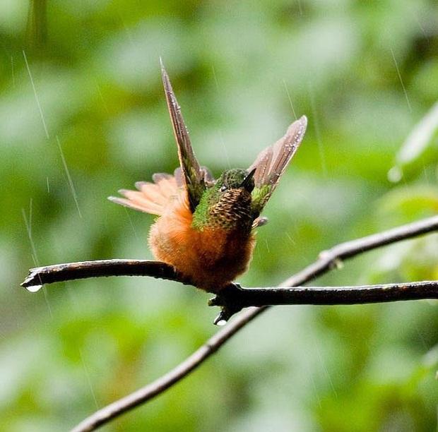 birds-in-rain- (14)