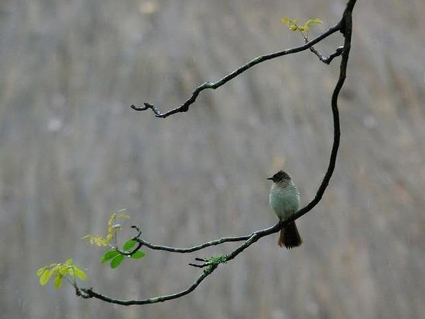 birds-in-rain- (17)