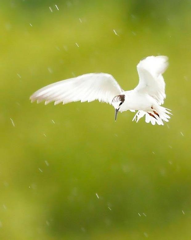 birds-in-rain- (18)