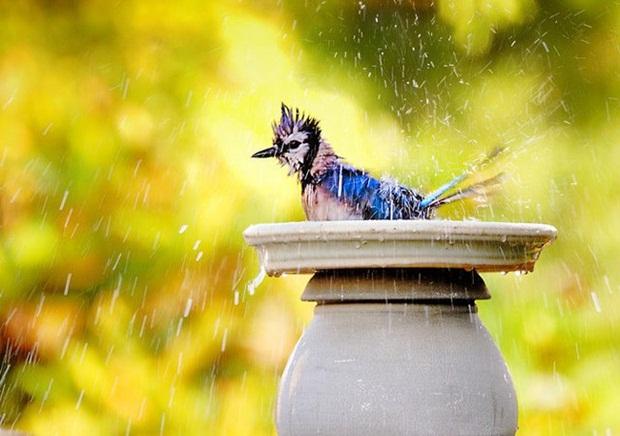 birds-in-rain- (23)