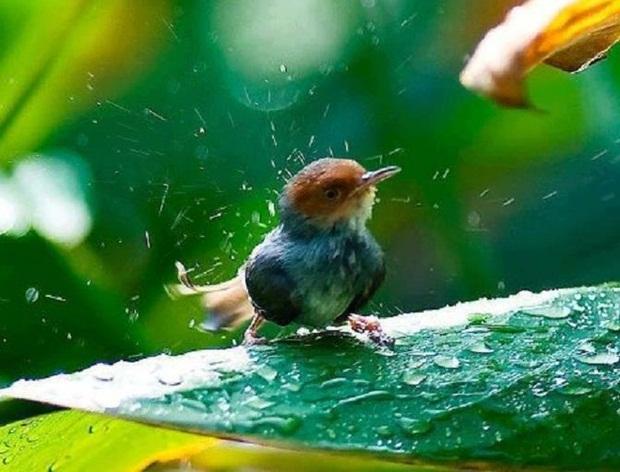birds-in-rain- (24)