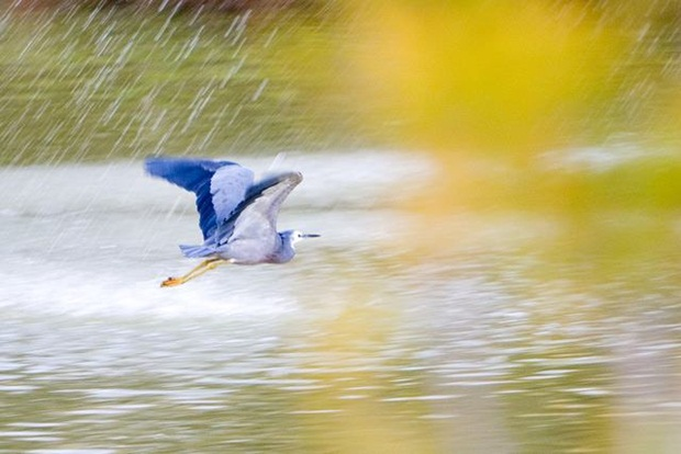 birds-in-rain- (25)