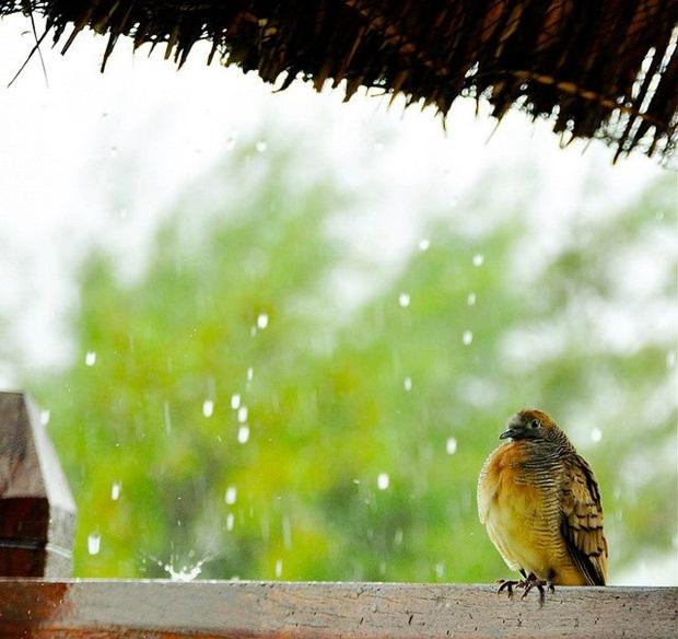 birds-in-rain- (26)