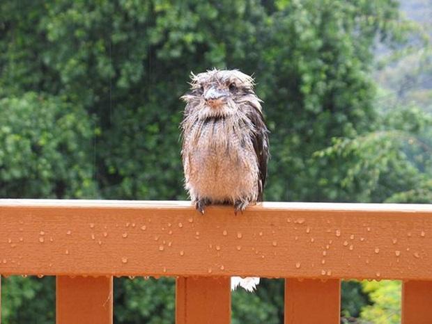 birds-in-rain- (28)