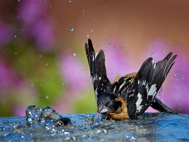birds-in-rain- (29)