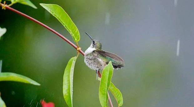 birds-in-rain- (7)