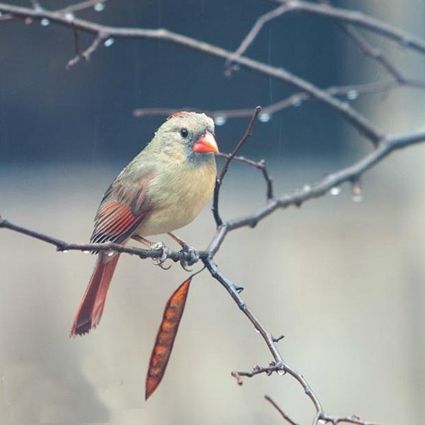 birds-in-rain- (8)