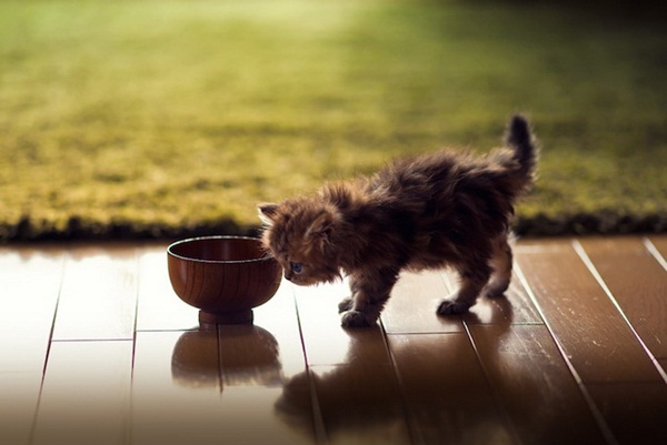 cute-kitten-daisy- (4)