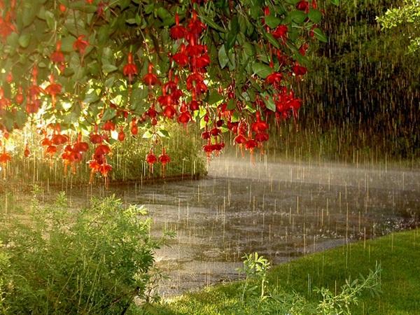 flower-in-rain- (14)