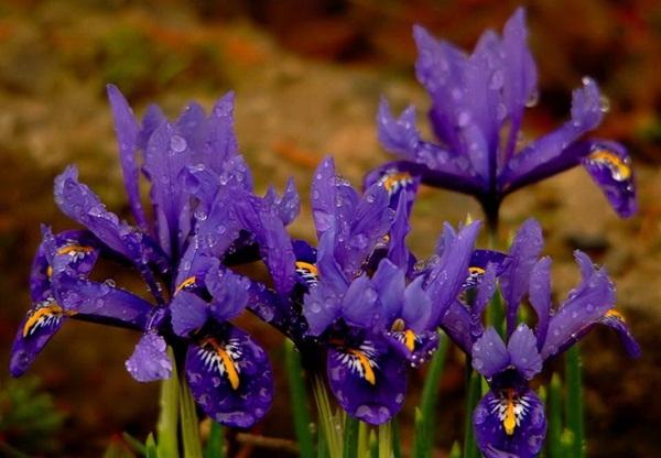 flower-in-rain- (16)