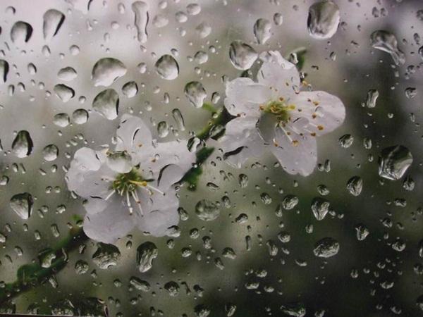 flower-in-rain- (20)