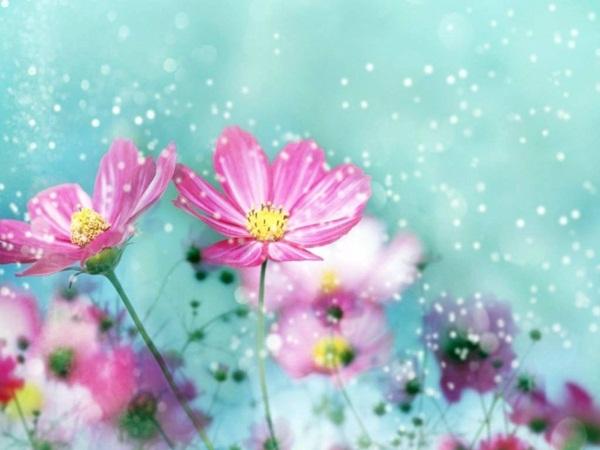 flower-in-rain- (22)