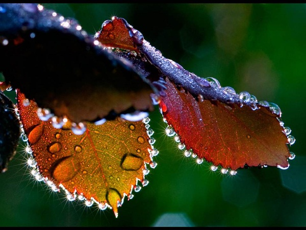 flower-in-rain- (26)