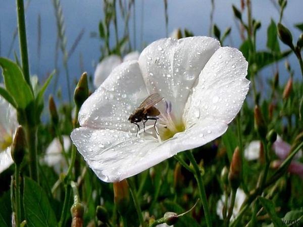 flower-in-rain- (28)