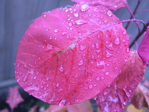 flower-in-rain- (31)