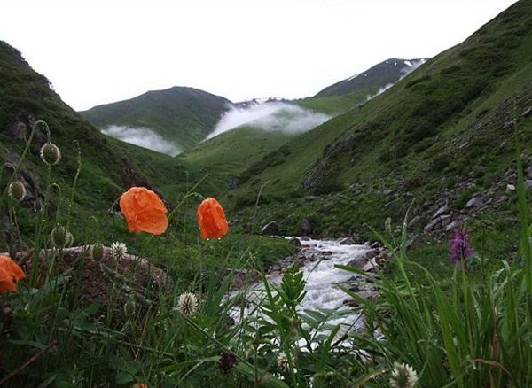 flower-in-rain- (37)