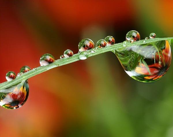 flower-in-rain- (39)