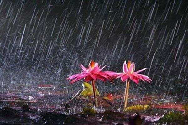 flower-in-rain- (9)
