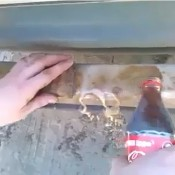 Remove Rust With Coke