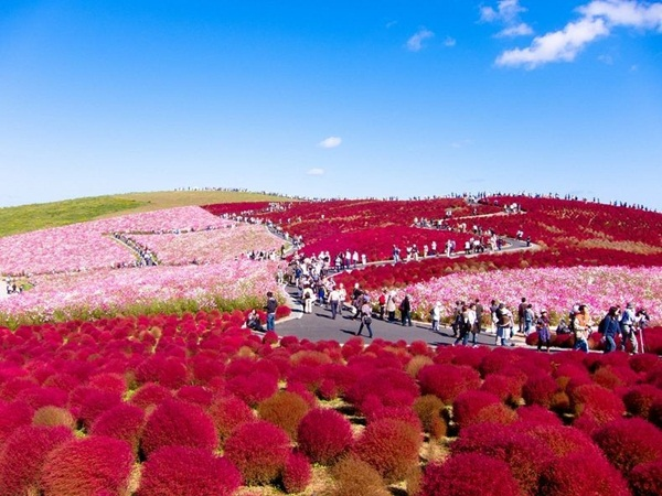 hitachi-seaside-park-japan-24-photos- (1)