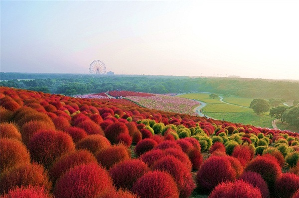 hitachi-seaside-park-japan-24-photos- (10)