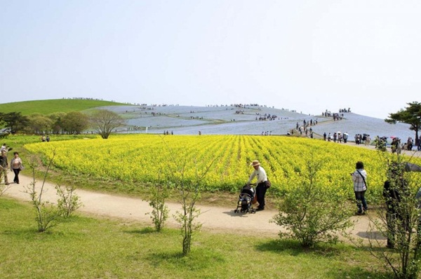 hitachi-seaside-park-japan-24-photos- (8)